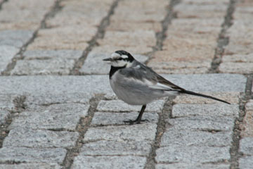 スカイビル下にいた鳥