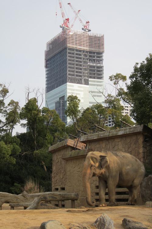 天王寺動物園からあべのハルカス1