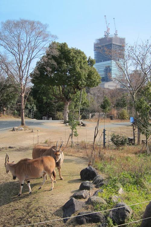 天王寺動物園からあべのハルカス3
