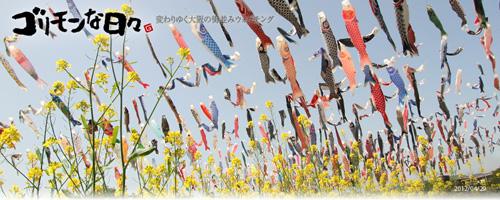 高槻の芥川桜堤公園の鯉のぼり2012