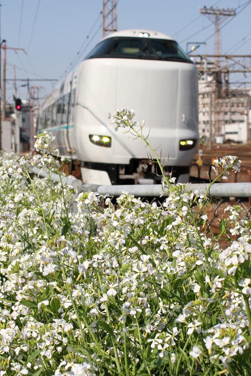 元梅田貨物駅・梅田信号場横に咲く大根の花