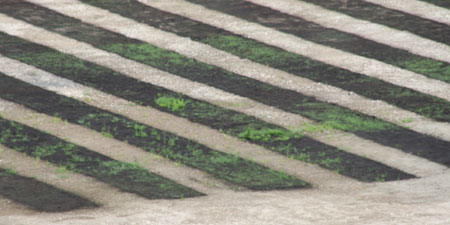 芝のアップ
